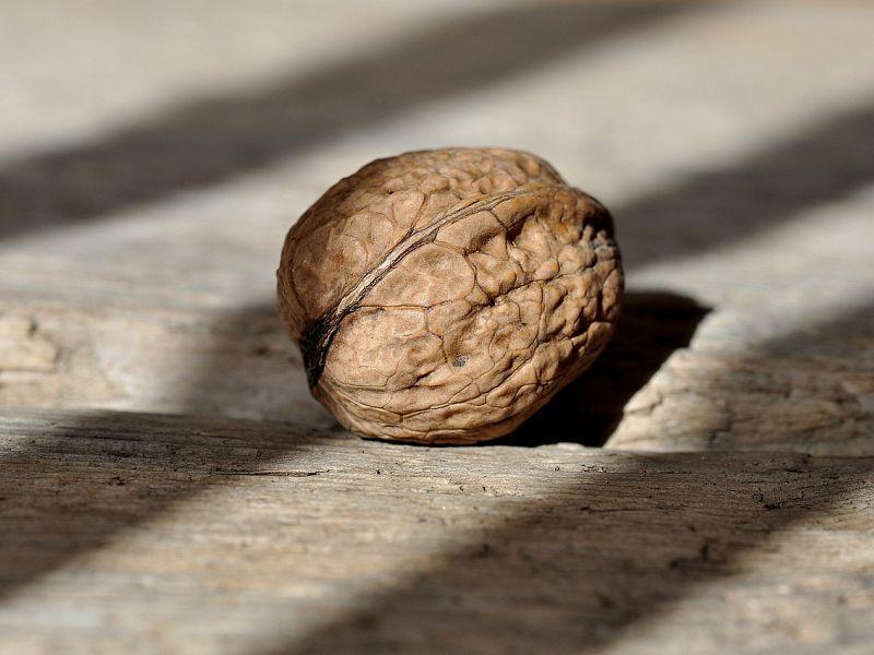 Z oreški učenje nič več tako trd oreh